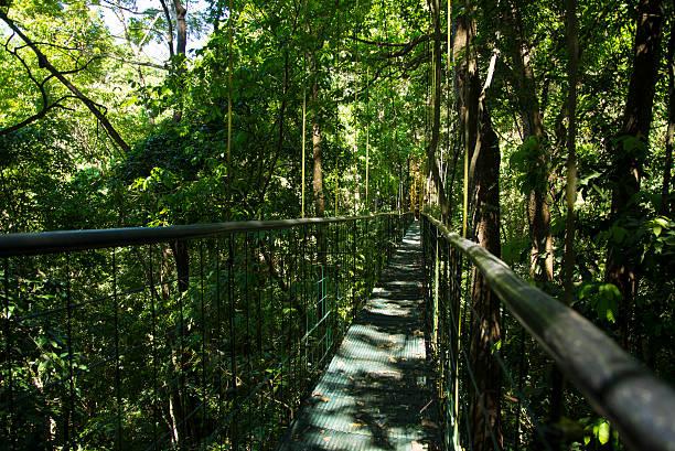 Costa Rica puntarenas sky walk cable bridge forest stock photo