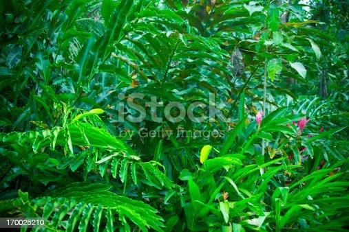 rainforest in costa rica