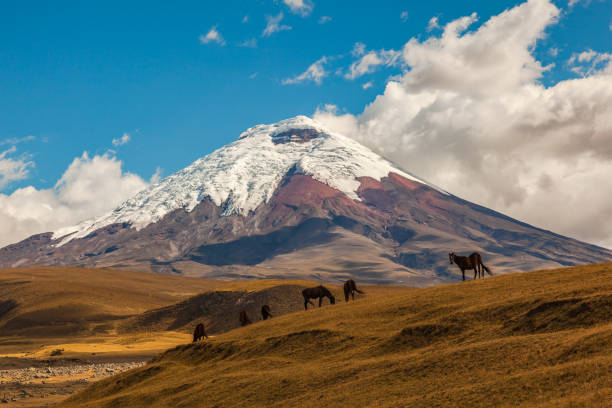 코 토 팍 시 국립 공원 - 에콰도르 뉴스 사진 이미지