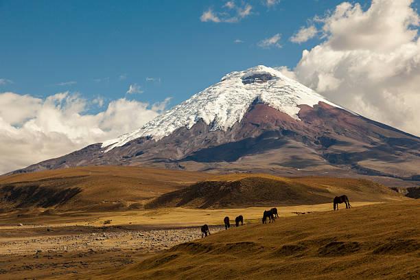 코토팍시 볼케이노 및 개척시대의 말이었습니다 - 에콰도르 뉴스 사진 이미지
