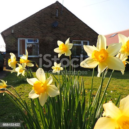 825525754 istock photo Cottage and Daffodils 668453402