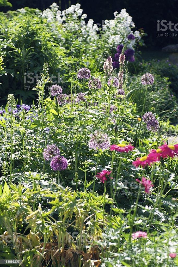 Cottage Garden stock photo