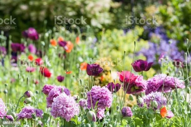 Cottage garden picture id685841664?b=1&k=6&m=685841664&s=612x612&h=bt3zy9 z6yot4bbrqiue7qal atjep97co rnby71ei=