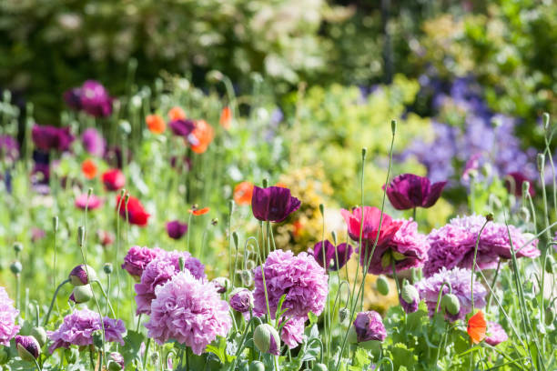 cottage garden - flowers stock photos and pictures