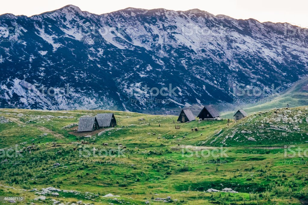 Cottages and sheep in Durmitor mountains in Montenegro. Hills and rocks above green grass fields in balkans stock photo