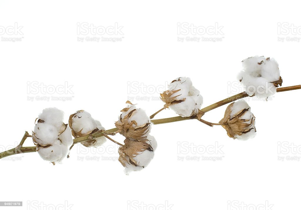 cotton 100% stock photo