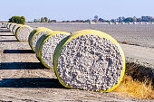 Cotton bales arranged in a row next to a harvested field, ready for pick up; Central California, United States