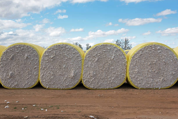 Cotton Bales stock photo