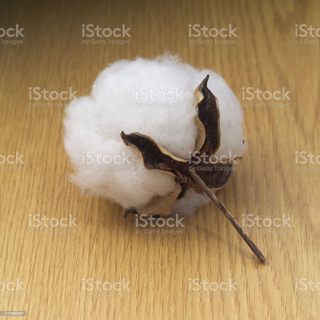 Cotton Boll royalty-free stock photo
