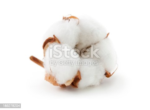 Cotton boll.