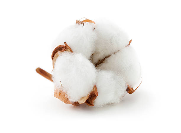 Cotton boll Cotton boll. cotton stock pictures, royalty-free photos & images