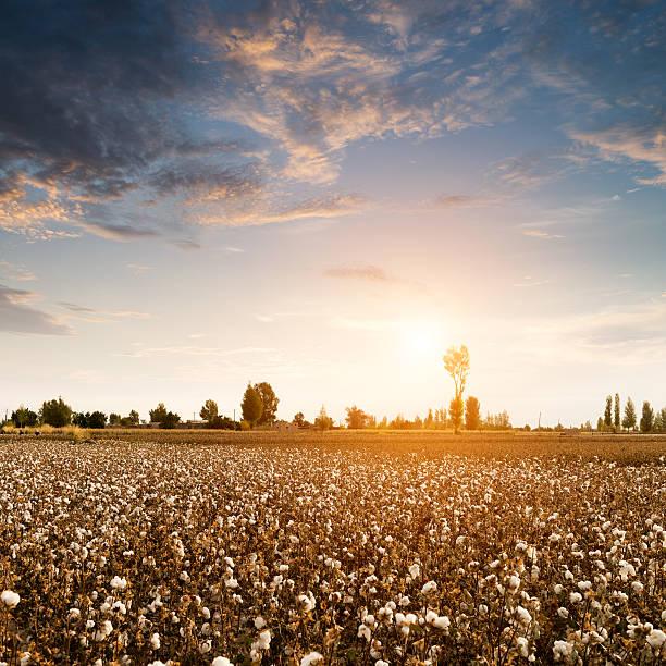 - Felder Weiß – Foto