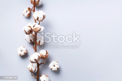 istock Cotton flower branch on grey background with copy space. Top view. Flat lay. Flowers composition. Cozy winter and organic lifestyle concept. Banner 1155398759