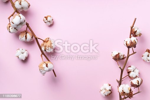 istock Cotton flower branch on pink background with copy space. Top view. Flat lay. Flowers composition. Cozy winter and organic lifestyle concept. Banner 1155398677
