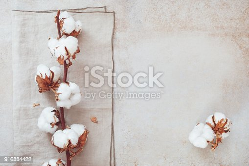 istock Cotton flower branch on rustic concrete background 916884422