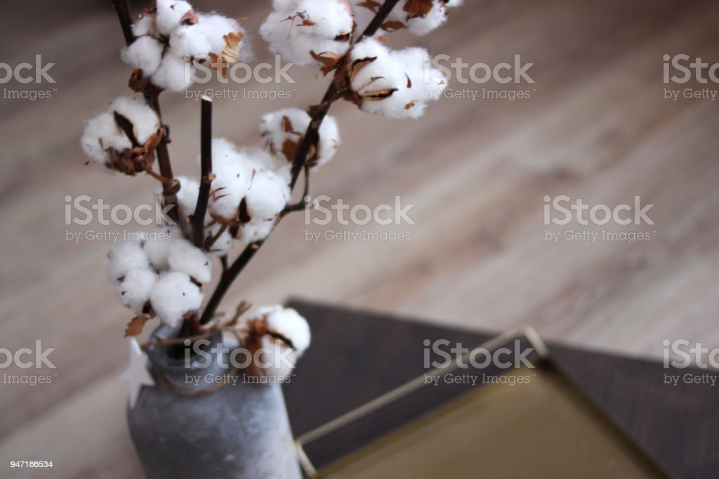 Fleur De Coton Se Bouchent Dans Un Vase Une Branche De Coton Dans Un