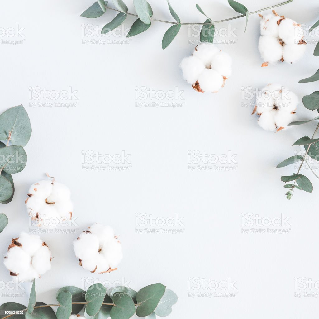 Branche Fleur De Coton photo libre de droit de les fleurs de coton et de branches