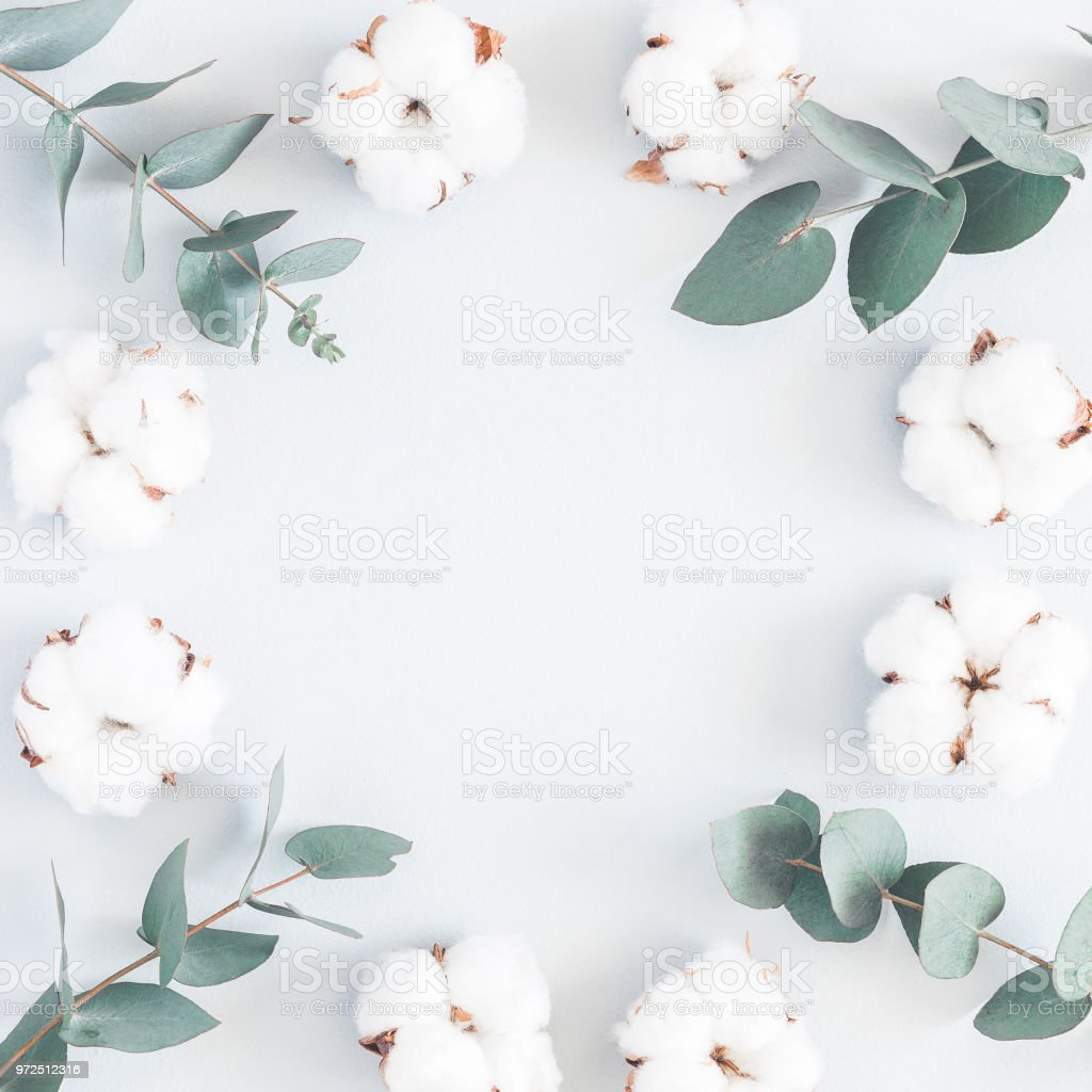 Branche Fleur De Coton cotton flowers and eucalyptus branches flat lay top view