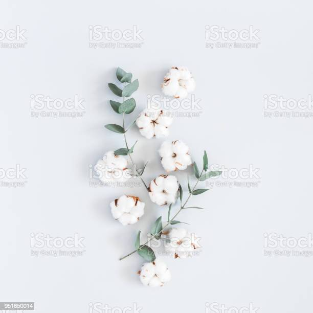 Cotton flowers and eucalyptus branches flat lay top view square picture id951850014?b=1&k=6&m=951850014&s=612x612&h=vqrijwulfiw us53xwaa7mzkpn xa5ptthruwsdydom=