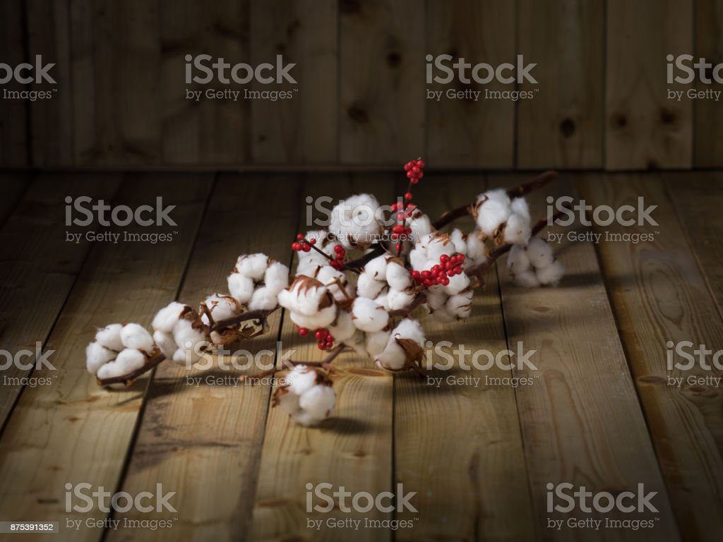 Cotton flowers on wood background stock photo