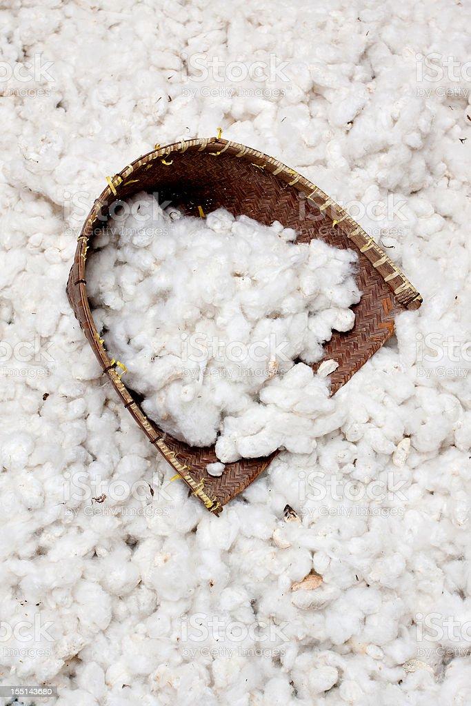 Cotton harvesting royalty-free stock photo