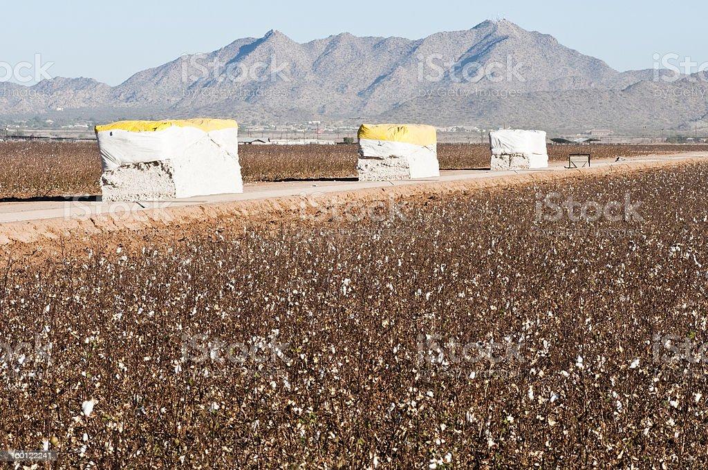 Cotton modules royalty-free stock photo