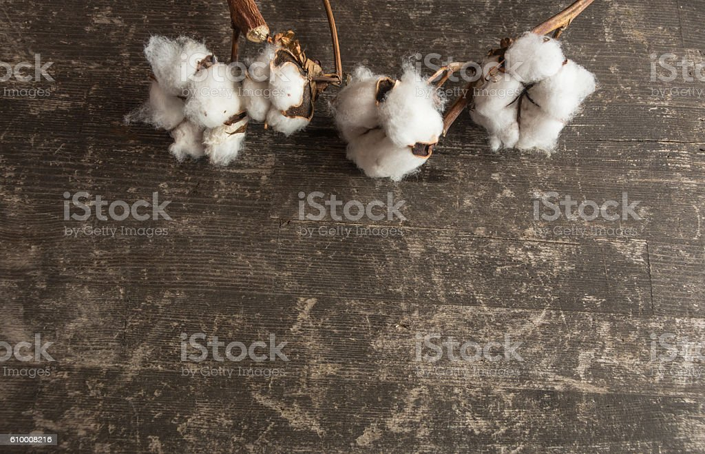 cotton plant  flower on wooden stock photo