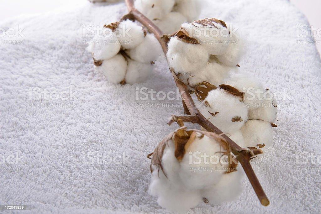 cotton plant on towel royalty-free stock photo