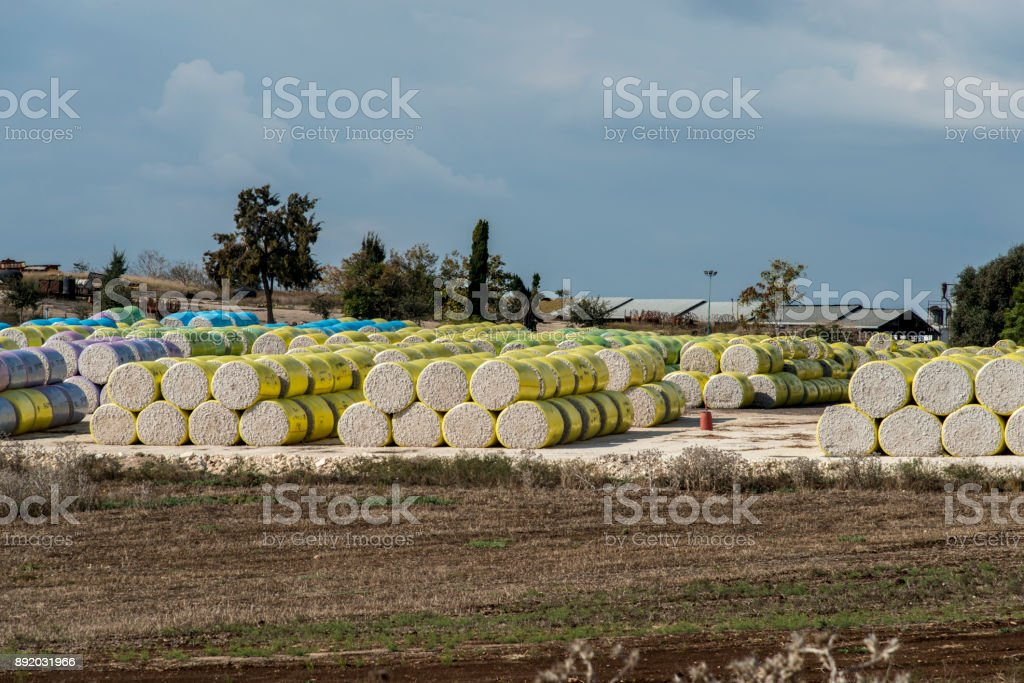 Cotton rolls in field stock photo