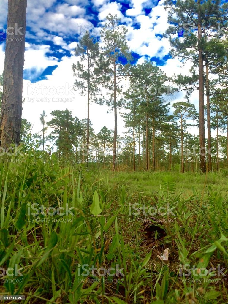 Cottonmouth Snake in the grass stock photo