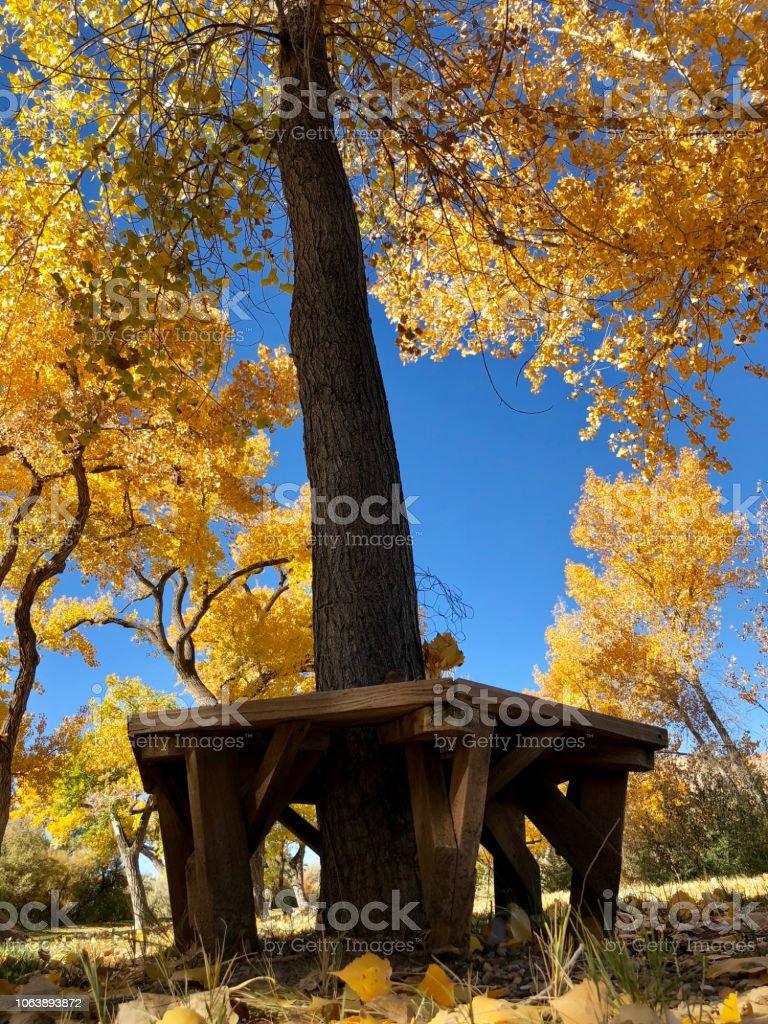 Cottonwood Bench in Autumn stock photo