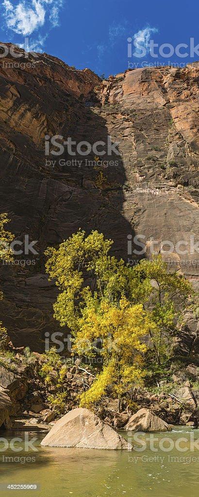 Cottonwood trees river canyon banner panorama Zion National Park Utah royalty-free stock photo