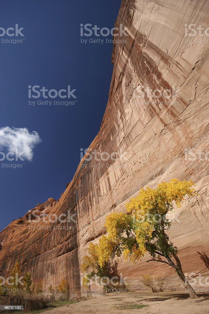 Cottonwoods and Cliffs royalty-free stock photo