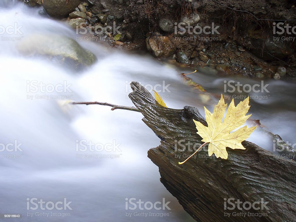 Cought leaf royalty-free stock photo