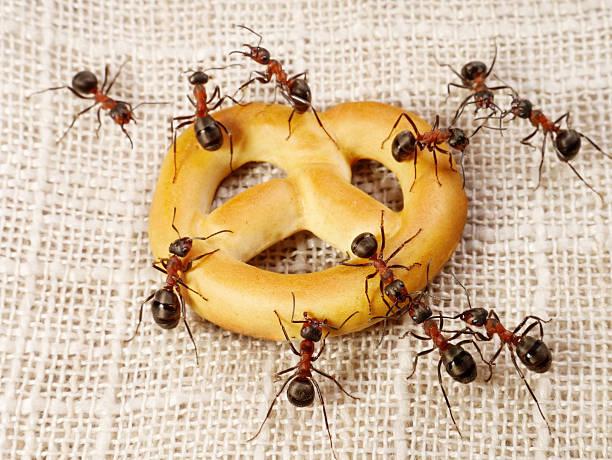 Rat, Ameisen, die Lösung, Teamarbeit – Foto