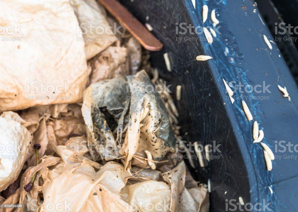 D'innombrables asticots rampants dans et autour d'une poubelle bio - Photo