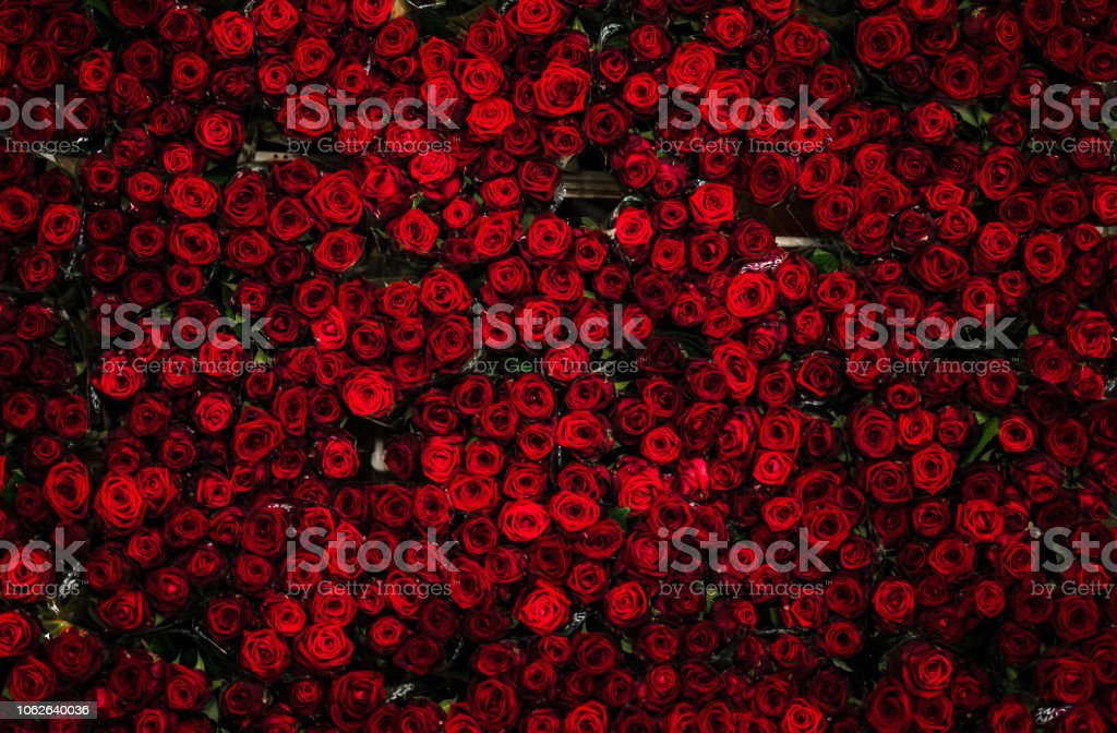 Countless dozens of beautiful red roses on a flower cart, seen from above, at a flower auction stock photo