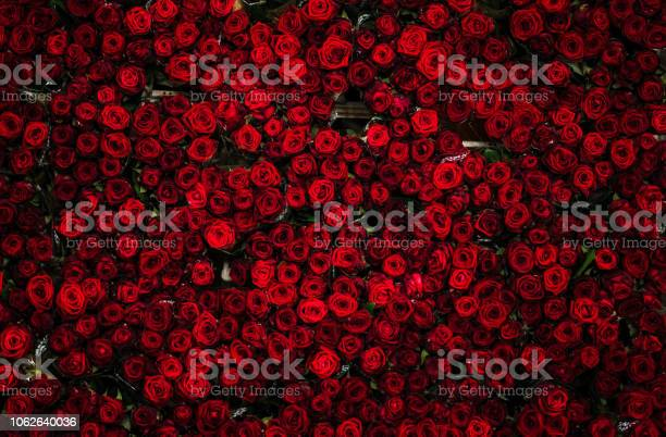 Photo of Countless dozens of beautiful red roses on a flower cart, seen from above, at a flower auction