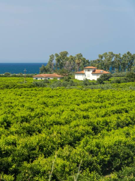 País e mar em Calábria, Italy, no verão - foto de acervo