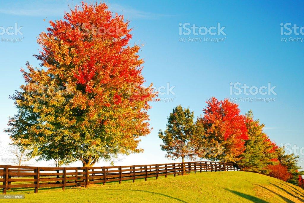 Country Autumn stock photo