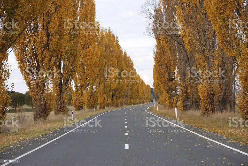 Country Bitumen Road Tree Lined royalty-free stock photo