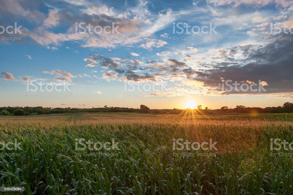 País de campo de maíz en la puesta del sol - foto de stock