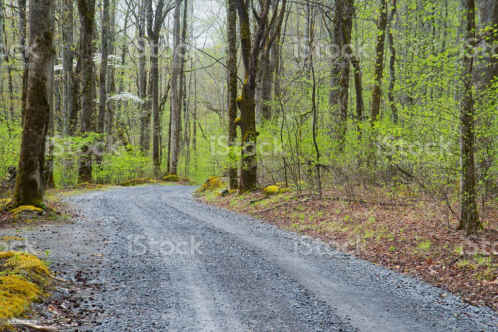 Country dirt road in spring in the Smokies. stock photo