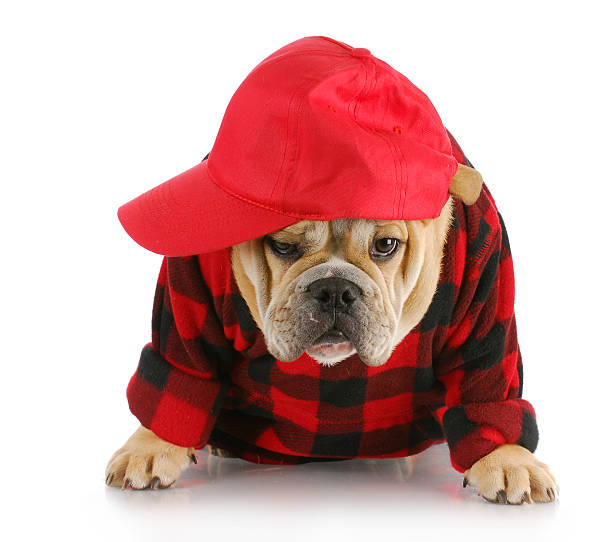 Country dog picture id153782905?b=1&k=6&m=153782905&s=612x612&w=0&h=4fpwfr0dz8uqkur6y4tvwlvxijrbmvcvdcb16 cjias=