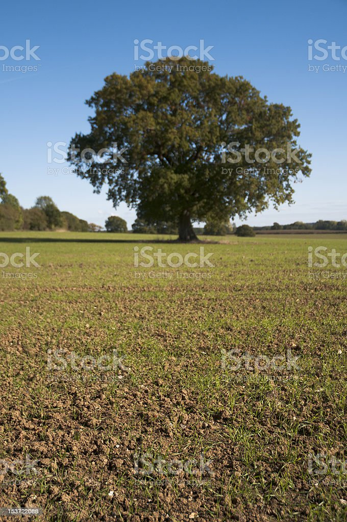 country field with young grass seeds stock photo