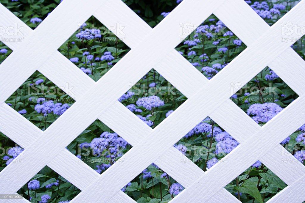Country Garden royalty-free stock photo