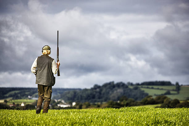 Country gentleman A gentleman, walking across a meadow, holding his shotgun, Devon, UK bird hunting stock pictures, royalty-free photos & images