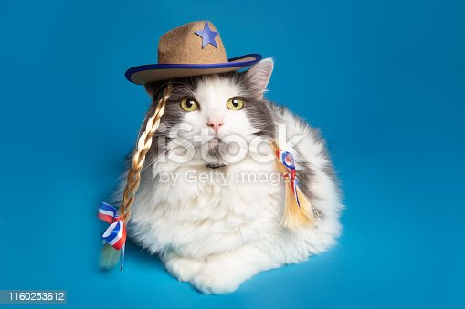 A portrait of a Ragamuffin cat dressed in a cowgirl hat with braids.