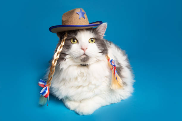 Country Girl Kitty Cat stock photo