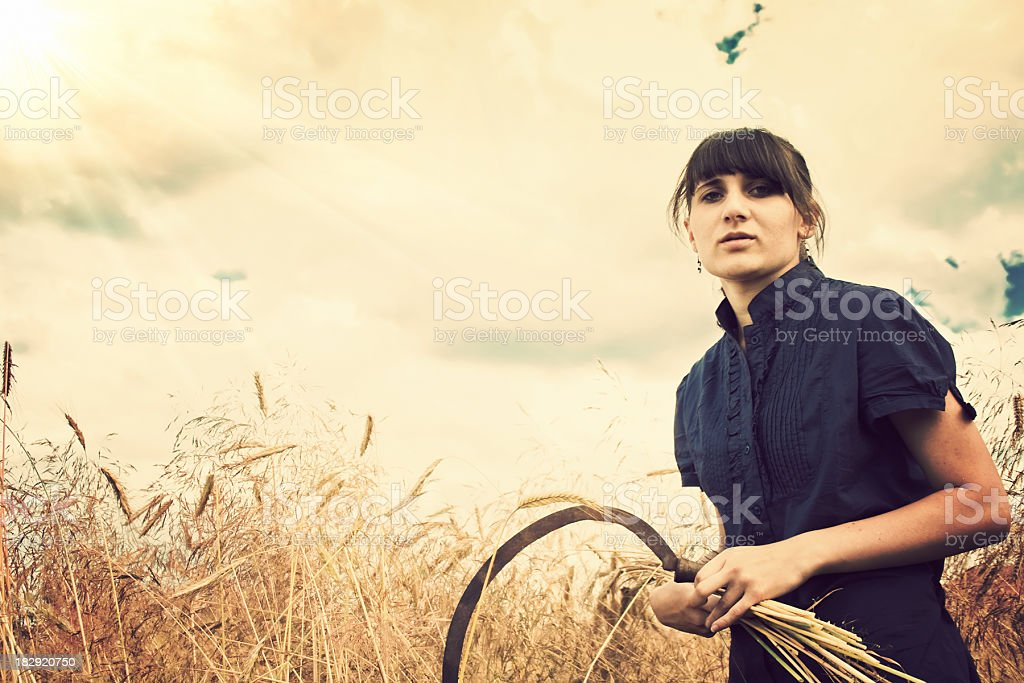 Country Harvest royalty-free stock photo